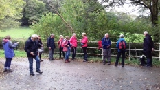 Longer Walking Group in Cardinham Woods